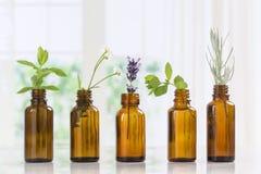 Bottiglie di Brown di olio essenziale con le erbe fresche immagine stock libera da diritti
