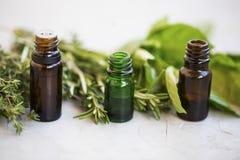 Bottiglie di olio essenziale di erbe delle foglie verdi con le erbe aromatizzate, ro Fotografie Stock