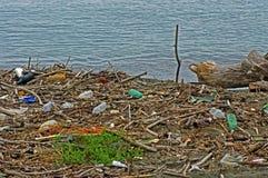 Bottiglie di plastica che un fiume introduce nel mar Mediterraneo Italia, settembre 2016 Fotografia Stock Libera da Diritti