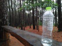 Bottiglie di vetro fra i pini fotografia stock libera da diritti