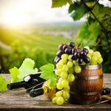 Bottiglie di vino rosso e bianco con l'uva fresca Immagini Stock Libere da Diritti