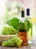 Bottiglie, vite e mazzo di vino bianco di uva all'aperto Fotografia Stock