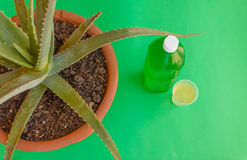 A bottle of aloe juice. The aloe plant is extracted  a refreshing juice drink Stock Photos