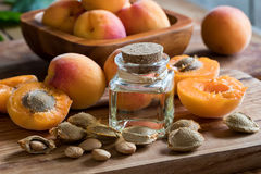 A bottle of apricot kernel oil with apricot kernels and apricots Royalty Free Stock Image