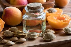 A bottle of apricot kernel oil with fresh apricots. A bottle of apricot kernel oil with apricot kernels and fresh apricots royalty free stock photography