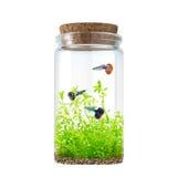 Bottle aquarium Royalty Free Stock Image