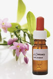 Bottle with Bach Flower Stock Remedy, Centaury Stock Photography