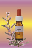 Bottle with Bach Flower Stock Remedy, Heather (Calluna vulgaris) Royalty Free Stock Photos