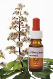 Bottle with Bach Flower Stock Remedy, White Chestnut (Aesculus hippocastanum) Stock Photo