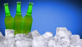 BOttle of beer Royalty Free Stock Image