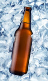 Bottle beer Stock Images