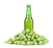 Bottle of beer and hop. Stock Photos