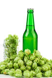 Bottle of beer and hop. royalty free stock photo
