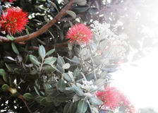 Bottle Brush Royalty Free Stock Image