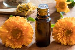 A bottle of calendula essential oil with calendula flowers Stock Images