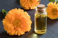 A bottle of calendula essential oil on a dark background Royalty Free Stock Image