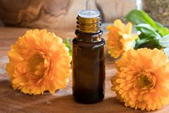 A bottle of calendula essential oil with fresh calendula Royalty Free Stock Photography