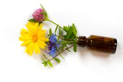 Bottle with calendula, mint, clover and carnation. Over white background - alternative medicine concept Stock Images