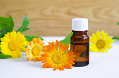 Bottle of calendula oil (Pot marigold extract, tincture, infusion) Royalty Free Stock Photo