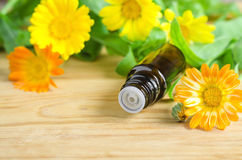 Bottle of calendula oil (Pot marigold extract, tincture, infusion) Stock Image