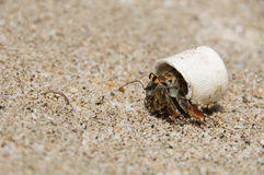 Bottle Cap Crab. A hermit crab with a modern house Royalty Free Stock Images