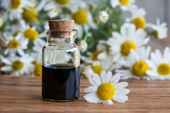 A bottle of chamomile essential oil with fresh chamomile flowers. A bottle of dark blue chamomile essential oil with fresh chamomile flowers on a wooden Royalty Free Stock Photo