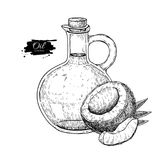 Bottle of coconut oil. Vector Hand drawn illustration. Cooking and beauty ingredient. Glass pitcher Royalty Free Stock Images