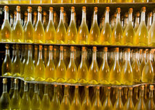 Bottle collection wine Royalty Free Stock Images