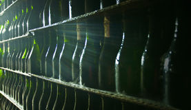 Bottle collection wine Royalty Free Stock Photo