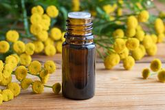 A bottle of common tansy essential oil with fresh tansy twigs royalty free stock image