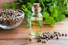A bottle of coriander essential oil with coriander seeds and lea Stock Images