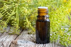 A bottle of dill seed oil with fresh blooming dill Royalty Free Stock Photography