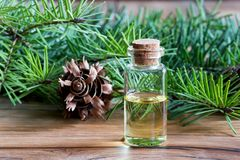 A bottle of Douglas fir essential oil with Douglas fir branches. A bottle of Douglas fir essential oil with young Douglas fir branches Royalty Free Stock Image