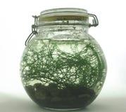 A Bottle Ecosystem Royalty Free Stock Photo