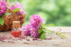 Bottle of elixir or essential oil and bunch of clover Royalty Free Stock Photo