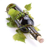 Bottle entwined with vine Stock Image