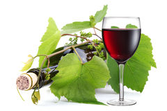Bottle entwined with vine and glass of wine Royalty Free Stock Photo