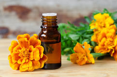 Bottle of essential marigold oil (Tagetes flowers extract, tincture, infusion) Royalty Free Stock Photos
