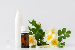 Bottle of essential oil and cream with rose white petals and flo. Wer Royalty Free Stock Photo