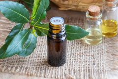 A bottle of bay leaf essential oil with fresh bay leaves Stock Image