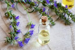 A bottle of hyssop essential oil with fresh blooming hyssop royalty free stock image