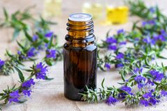 A bottle of hyssop essential oil with fresh blooming hyssop. A bottle of essential oil with fresh blooming hyssop twigs royalty free stock images
