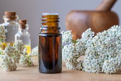 A bottle of yarrow essential oil with fresh blooming yarrow stock photography