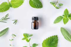 Bottle of essential oil with fresh herbal sage, rosemary, oregano, thyme, lemon balm spearmint and peppermint setup with flat lay stock image