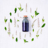 Bottle of essential oil with fresh holy basil leaves and flowers Royalty Free Stock Photo