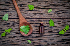 Bottle of essential oil with fresh lemon balm leaves in spoon se Stock Photos