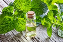 A bottle of melissa essential oil with fresh melissa. A bottle of essential oil with fresh melissa twigs royalty free stock photography