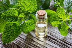 A bottle of melissa essential oil with melissa twigs. A bottle of essential oil with fresh melissa twigs royalty free stock photography