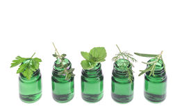 Bottle of essential oil with herb fresh plants and flowers Royalty Free Stock Images
