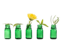 Bottle of essential oil with herb fresh plants and flowers Stock Photo